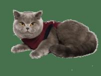 Jacketz Medical Body Suit kat - Jacketz Medical Body Suit kat 2XS