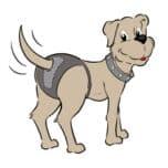 Rubycare hondenbroekje