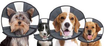 ZenPet Procone Hond en Kat