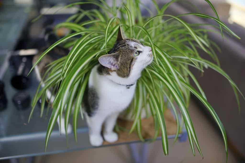kamerplant kat