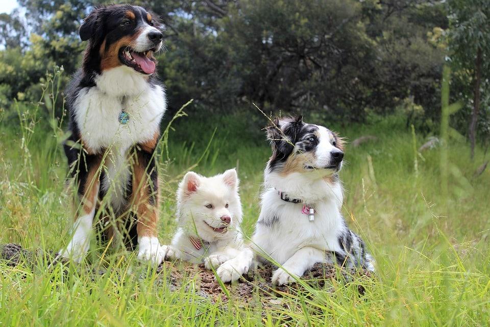 honden plassen hond gras